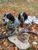 Cani e caccia