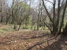 habitat-140406-31
