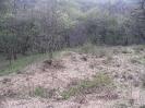 habitat150412-7